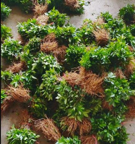 种一亩花椒能赚多少钱?种花椒的成本和利润