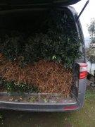 100亩花椒年利润?九叶青花椒的种植的成本和利