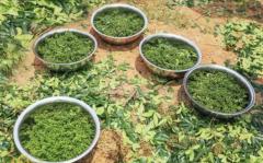 花椒价格多少钱一斤2021年5月-6月